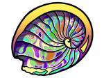 81002-Abalone-Shell